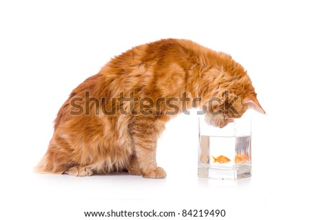 cat and a gold fish - stock photo