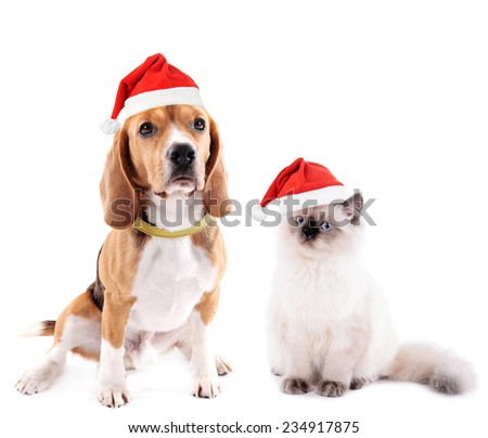 Cat and beagle dog with Santa Hat isolated on white - stock photo