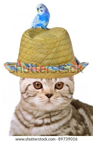 Cat and bird isolated - stock photo