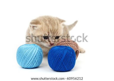 cat and blue wool - stock photo