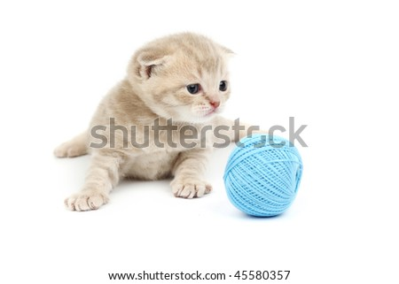 cat and blue wool ball - stock photo