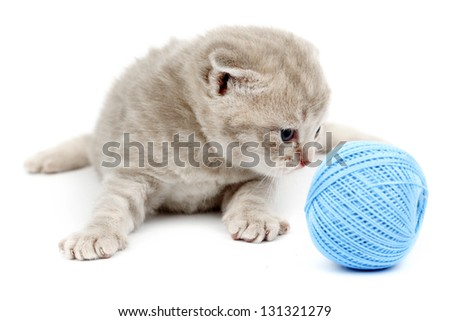 cat and blue wool ball isolated on white - stock photo