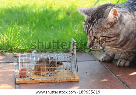 cat and captured mouse in a live trap, in the garden - stock photo