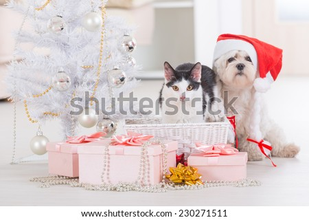 Cat and cute little dog Maltese sitting with gifts near Christmas tree wearing Santa Claus hat  - stock photo