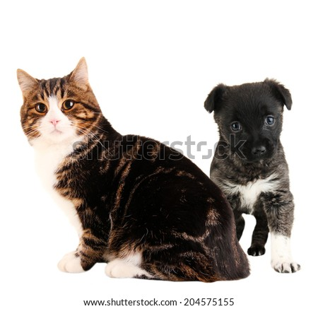 Cat and cute puppy isolated on white - stock photo