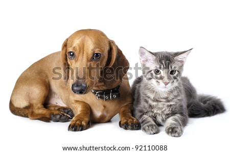 Cat and dog - stock photo