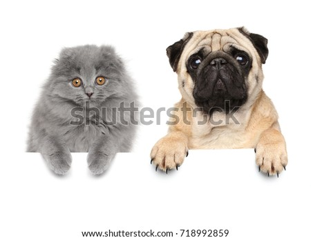 Cat and dog above banner isolated on white background