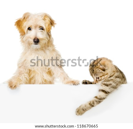 Cat and Dog above white banner looking at camera.  isolated on white background - stock photo