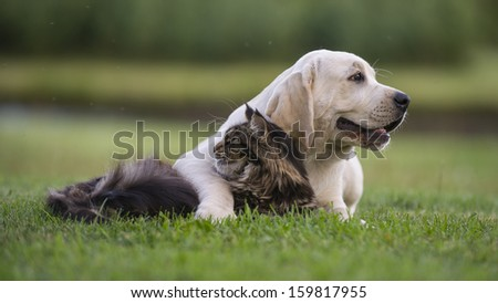 cat and dog always looking at different sides - stock photo