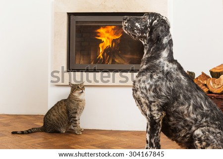 cat and dog by the fireplace - stock photo