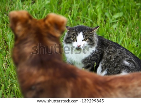 Cat and Dog. Conflict. Cat and dog on green grass background. Evil cat. Cat defends its territory. - stock photo