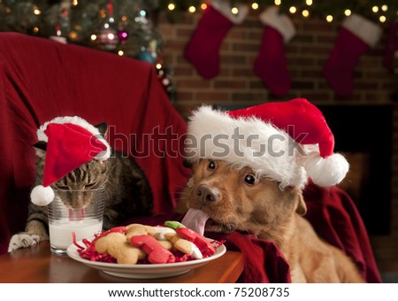 Cat and Dog eating and drinking Santa's cookies and milk. - stock photo