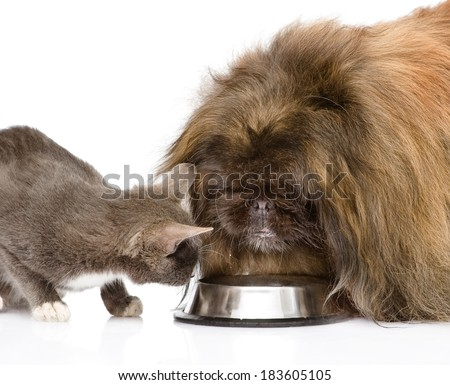 cat and dog eating together. isolated on white background - stock photo