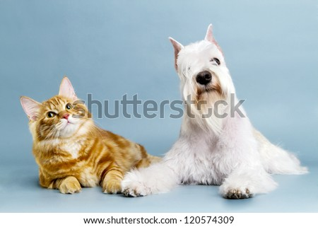 Cat and dog friends. - stock photo