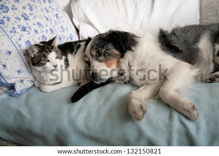 Cat and dog friends nap together on a bed - stock photo