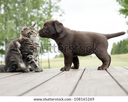 cat and dog friendship - stock photo