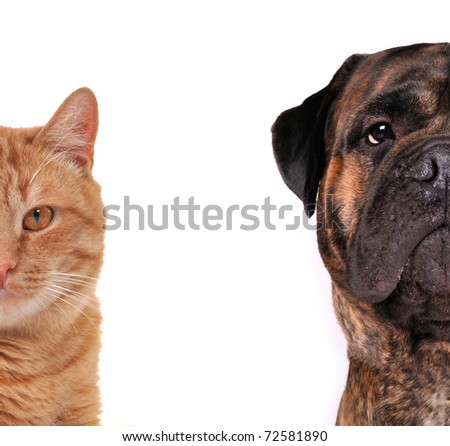 Cat and Dog - half of muzzle close up portraits isolated on white - stock photo