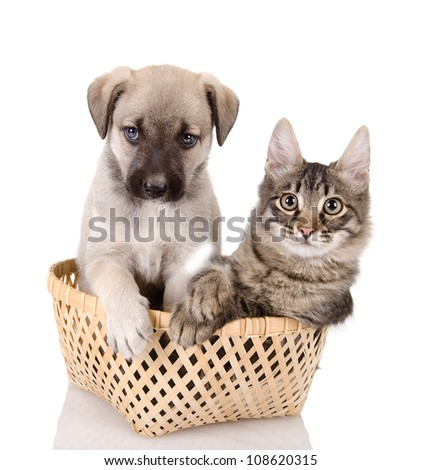 Cat and dog in basket. isolated on white background