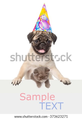 Cat and Dog in birthday hat above white banner. Space for text. isolated on white background - stock photo