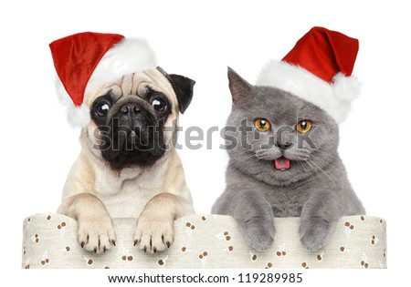 Cat and dog in red Christmas hat on a white background - stock photo