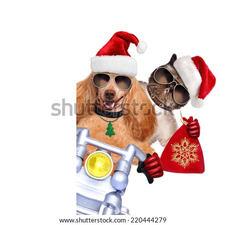 Cat and dog in red Christmas hats - stock photo