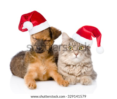 cat and dog in red christmas hats. isolated on white background