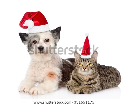 Cat and dog in red christmas hats lying together. isolated on white background