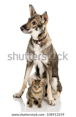 cat and dog. isolated on white background - stock photo
