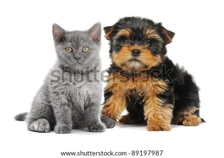cat and dog isolated on white background