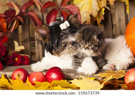 cat and dog,  kitten and puppy - stock photo