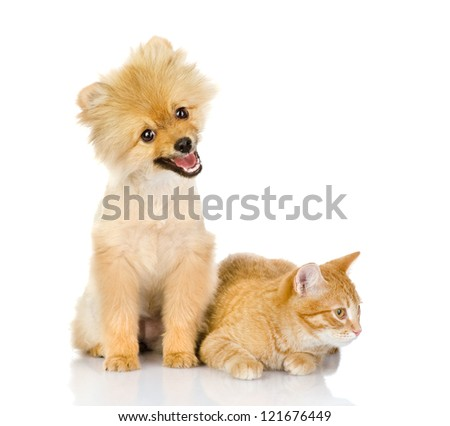 cat and dog look in the camera. isolated on white background - stock photo