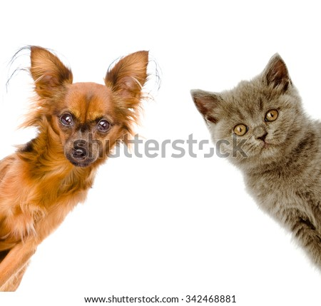 cat and dog look out. isolated on white background - stock photo