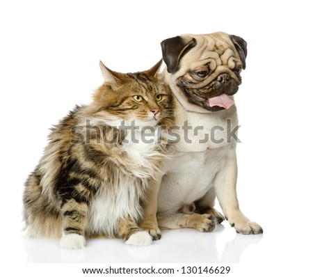 Cat and dog looking away. isolated on white background - stock photo