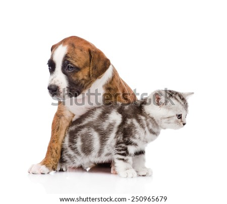 Cat and dog looking every which way. isolated on white background - stock photo