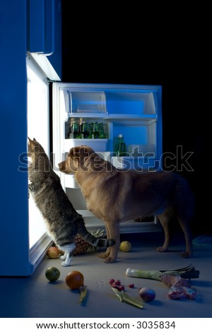 Cat and dog looking for meat in the refrigerator