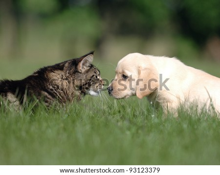 Cat and dog love, friendship, meeting, acquaintance. - stock photo