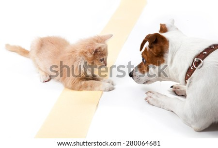 Cat and dog lying and looking at each other - stock photo