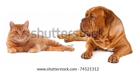 Cat and dog lying close to each other isolated on white background - stock photo