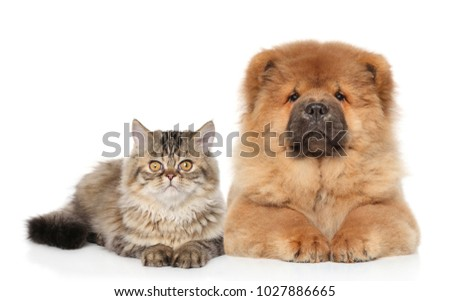 Cat and dog lying together on white background. Animal theme