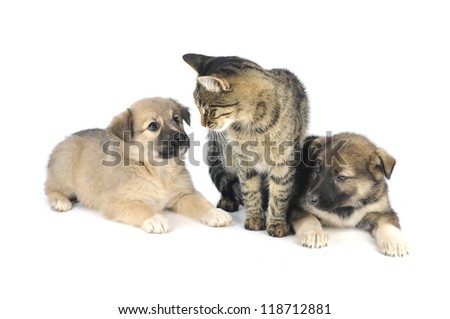 cat and dog  on a white background - stock photo