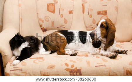 cat and dog on the couch - stock photo