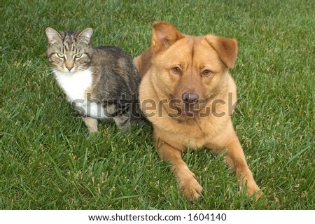 cat and dog on the grass - stock photo