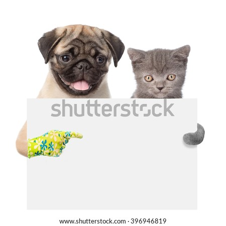 Cat and Dog peeking from behind empty board and points on empty banner. isolated on white background - stock photo