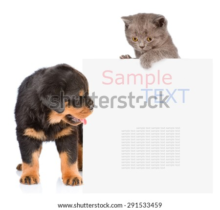 Cat and Dog peeking from behind empty board. isolated on white background - stock photo