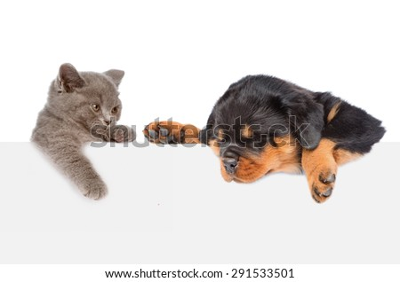 Cat and Dog peeking from behind empty board looking down. isolated on white background - stock photo