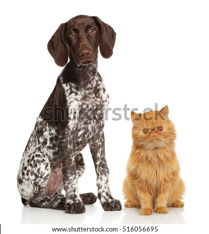 Cat and dog. Portrait on a white background