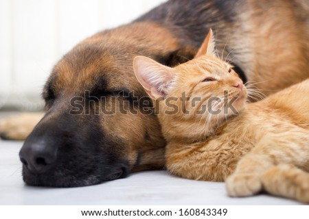 Cat and dog resting together - stock photo