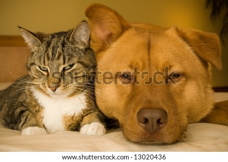 Cat and dog resting together on bed
