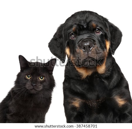 Cat and dog series. Close-up isolated on white background - stock photo