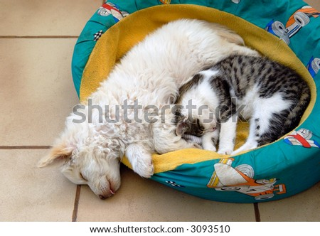Cat and dog sharing bed - stock photo